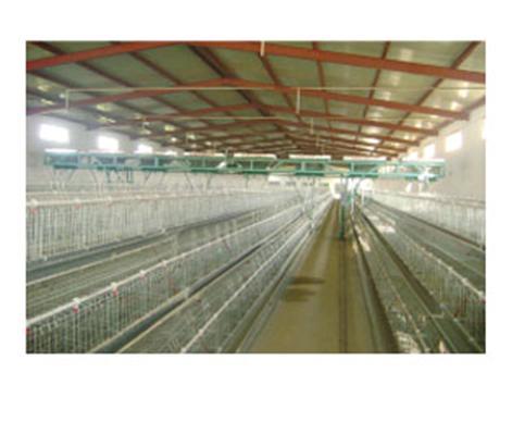 阶梯式蛋鸡笼养设备