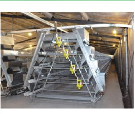 跨斗式阶梯式肉鸡养殖设备
