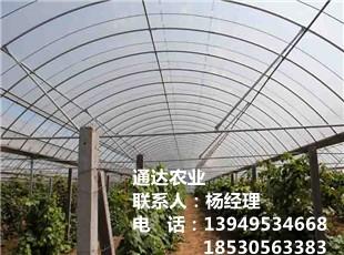 新型蔬菜平博pinnacle sports