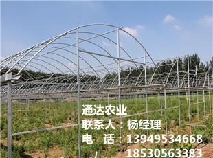 现代蔬菜平博pinnacle sports
