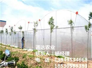蔬菜平博pinnacle sports建设