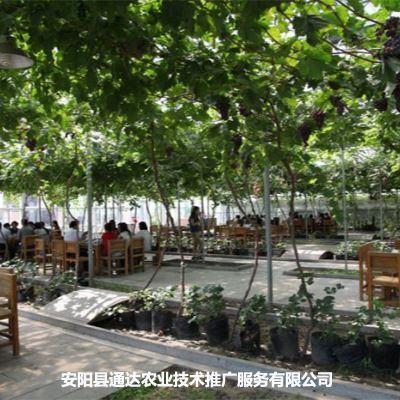 长治生态餐厅