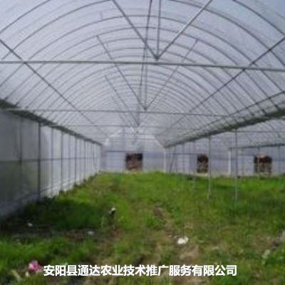 长治塑料蔬菜大棚