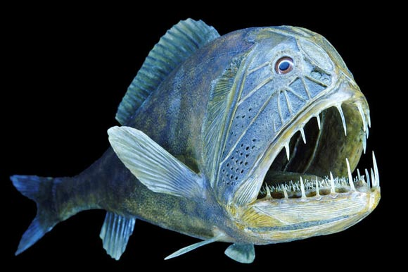 海洋生物标本