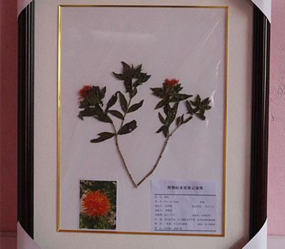 植物覆膜标本