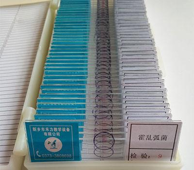 微生物玻片标本-霍乱弧菌