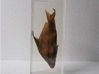 海洋鱼类浸制标本