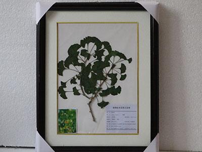 植物压制标本