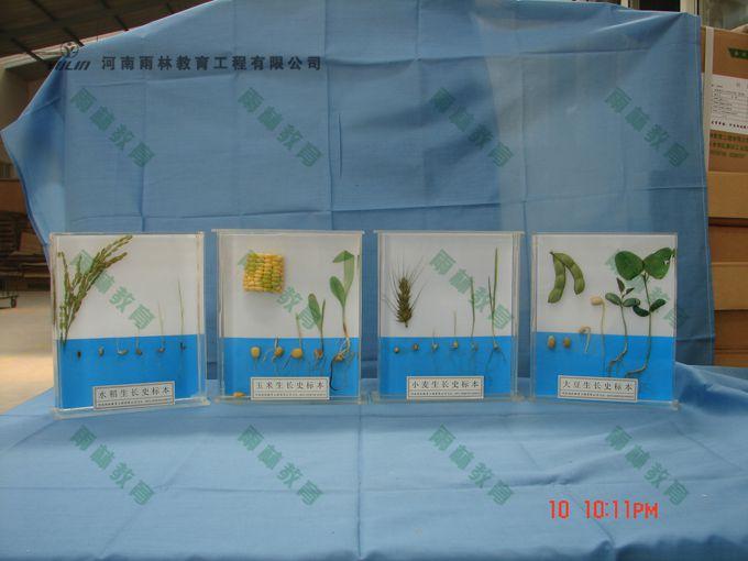 植物生长标本