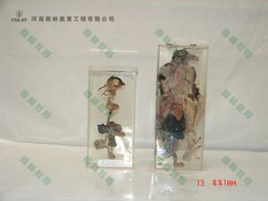 鸽骨骼包埋标本
