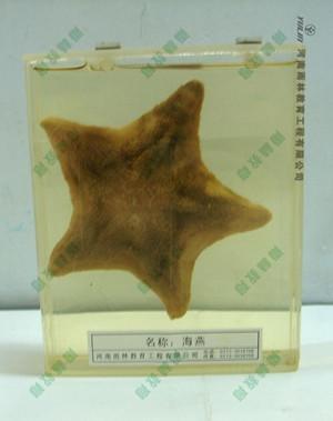 海葵包埋标本