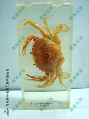 海蛰包埋标本