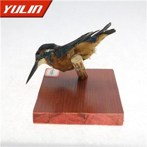 普通翠鸟标本