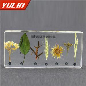 花序类型包埋标本