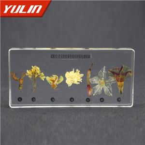 花冠类型包埋标本