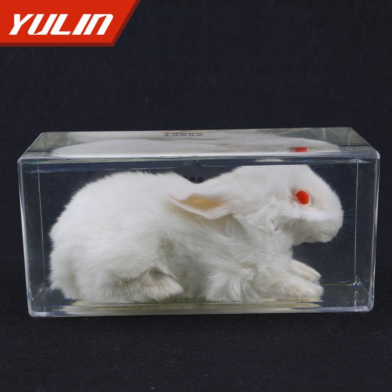 兔外形包埋标本