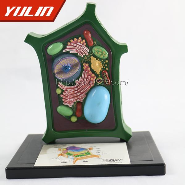 植物细胞模型