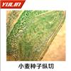 植物生物学种子类生物玻片