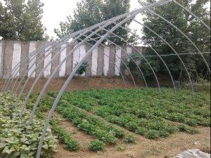 瓜果温室大棚