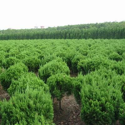 【推荐】保定苗木基地哪家好 浅谈苗木绿化的好处