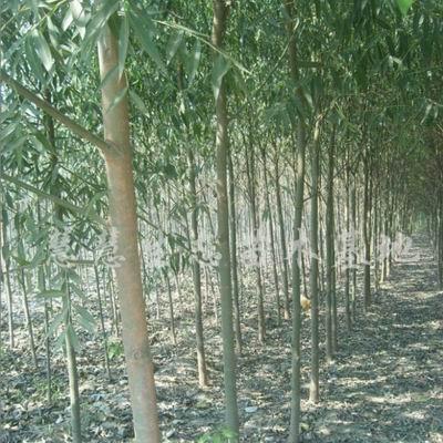 【知识】种植苗木绿化环境 起苗栽苗把握注意事项提高成活率