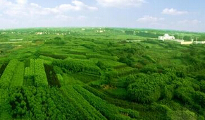 【资讯】速生柳价格分析 种植苗木绿化环境