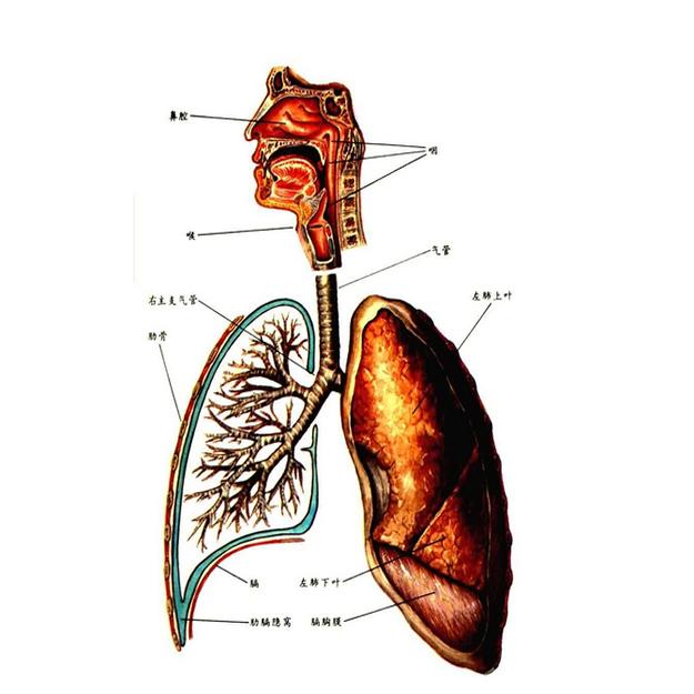 石家庄哮喘病
