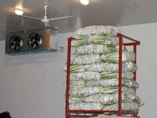 贵州蔬菜保鲜冷库