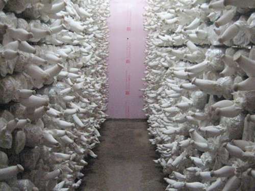 贵州保鲜冷库安装