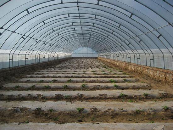 郑州温室大棚的特性