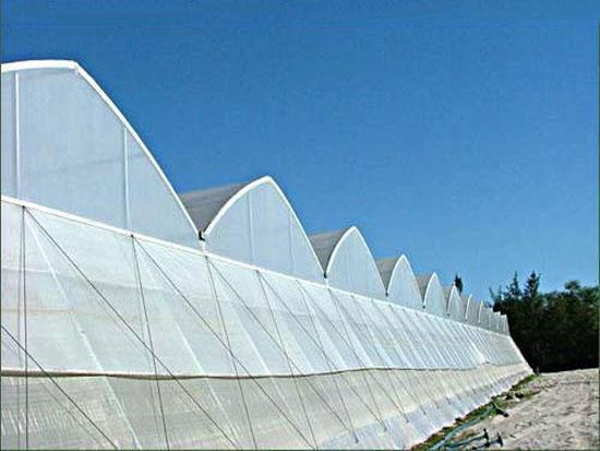 郑州温室大棚结构