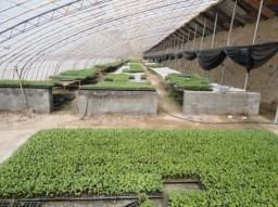 蔬菜育苗基地