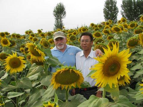 【精华】向日葵种植管理 向日葵品种选择及种子处理