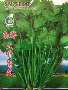 葉菜類種子