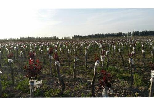 【资讯】植物绿化小知识 绿化公司是干什么的