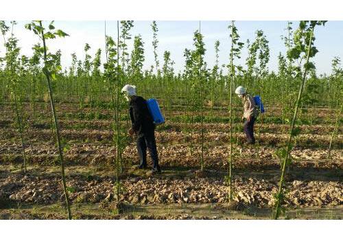 苗圃基地规划