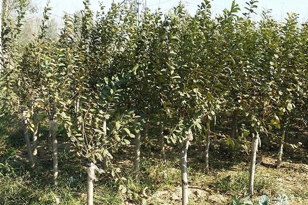 郑州园林绿化公司
