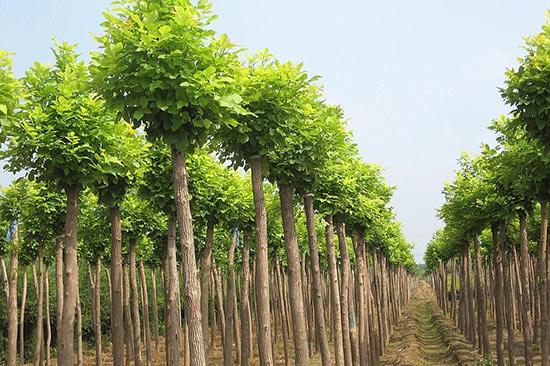 【热】选购果树苗木要点 绿化的标准