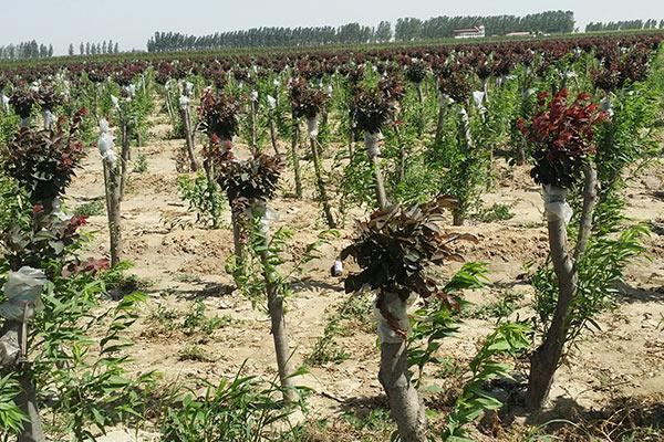 【厂家】苗圃基地是什么 植物绿化的作用
