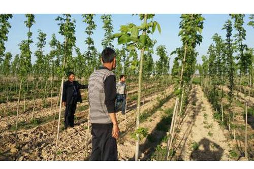 河南绿化工程