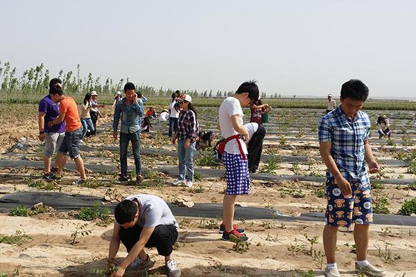 郑州苗木基地