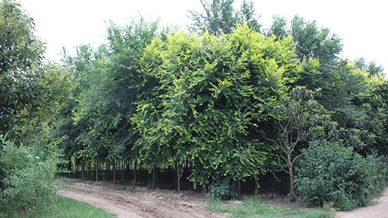 河南园林绿化