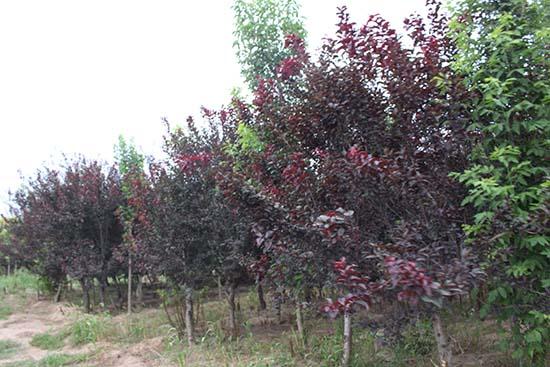 河南园林绿化基地