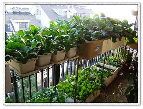 阳台生态菜园