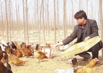 【图片】鸡舍卫生如何做好 柴鸡养殖的饲料问题