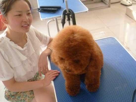 宠物美容师培训