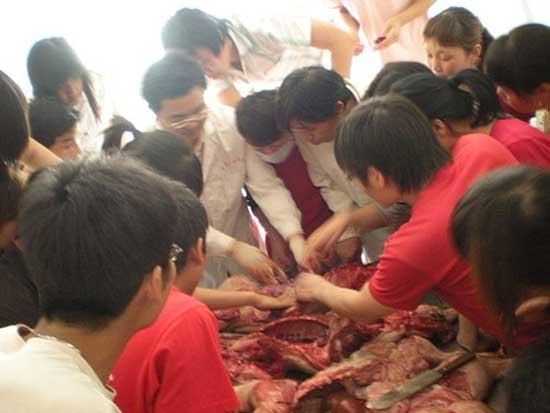 猪病防治培训