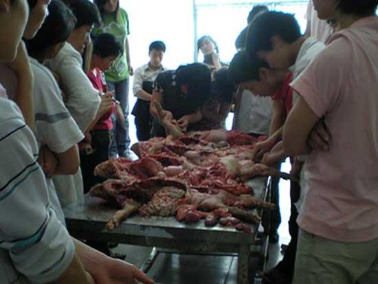 猪病防治培训实践