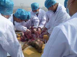猪病防治培训专业