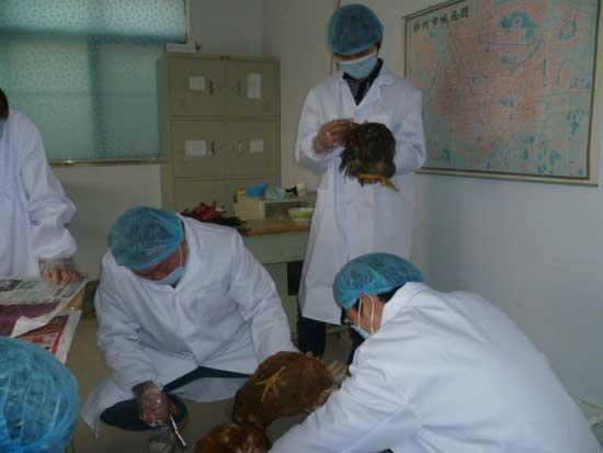 养鸡与鸡病防治培训
